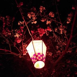 夜桜2.jpg