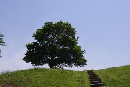 からっぽの木.jpg